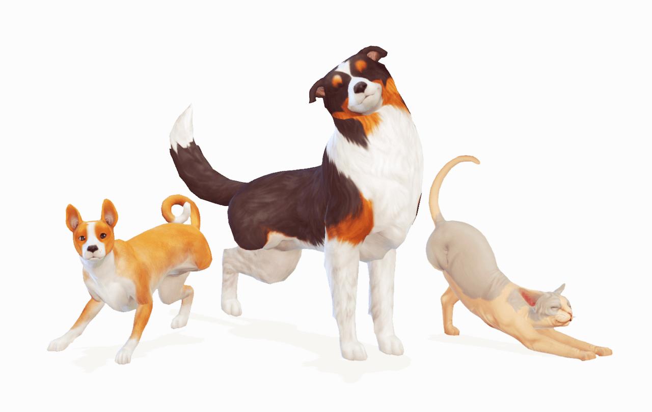 Как завести питомца в Sims 4: собаку, кошку или хомяка